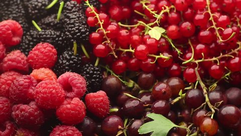 Mix of different berries, fresh berries close up rotation, seamlessly tiling. Different fresh berries as background. Fresh wild forest berries black and red colors