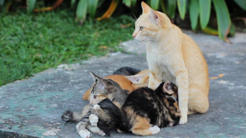sonic cat dog fox deterrent