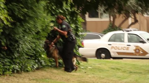 Los Angeles, California - May 2013 - K-9 dog with female officer actively searchingA female police officer with the canine unit are looking for clues in a bush at daytime with officers and guns