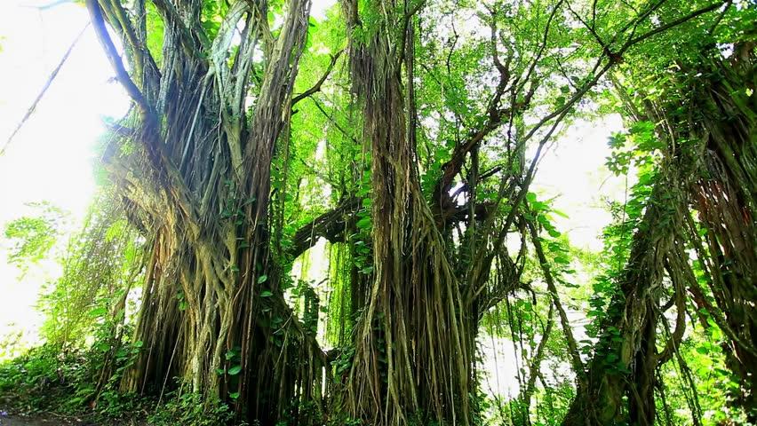 brazilian rain forest argument paper