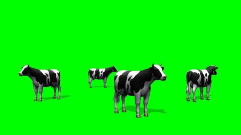 cows on pasture - green screen