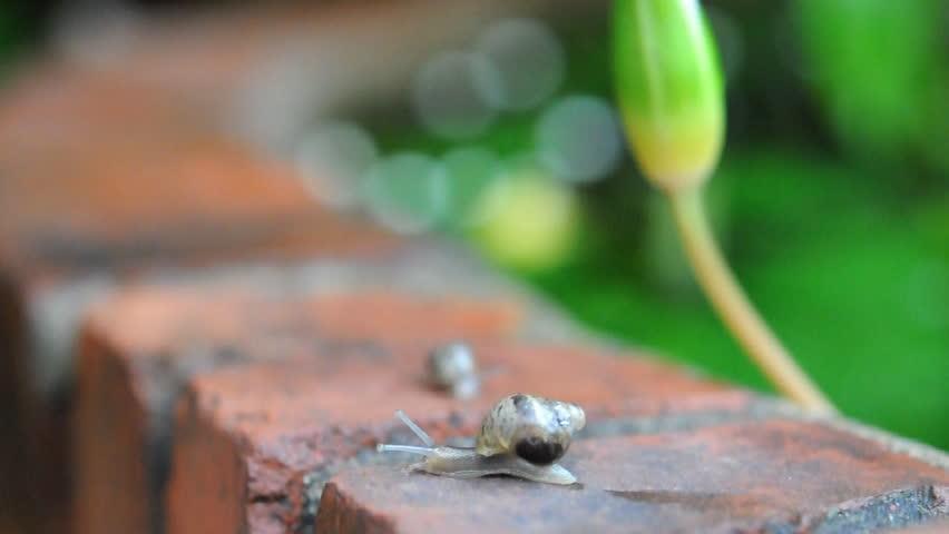 Snail in the garden | Shutterstock HD Video #6995836