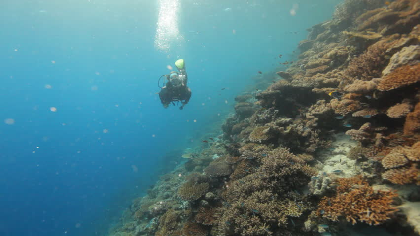 female diver along coral reef