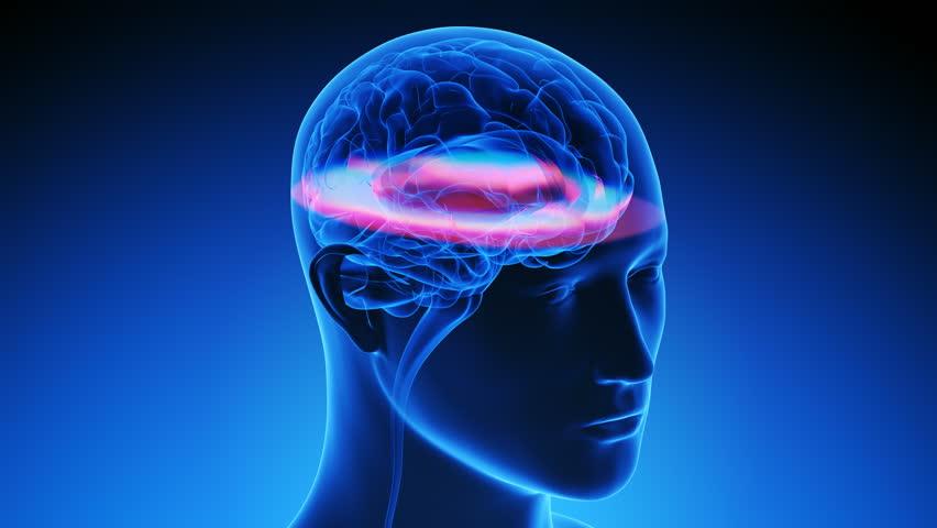 Human Brain scan while rotating - MRI methodology illustrated  (looped)