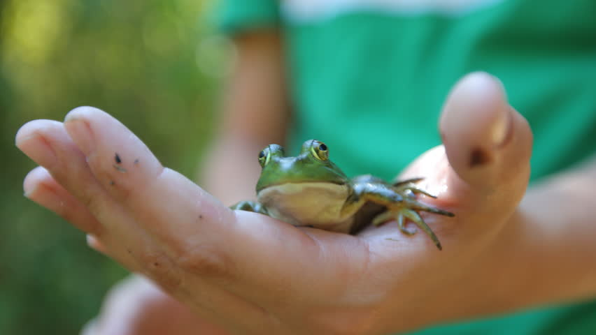 Closeup of frog in boys hand