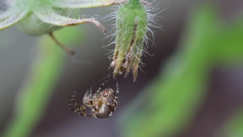 Spider on web outdoors | Shutterstock HD Video #7257796