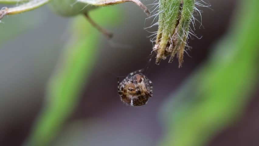 Spider on web outdoors | Shutterstock HD Video #7257856