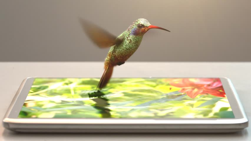 tablet pc and humming-bird, 3d animation, 4K #7301926