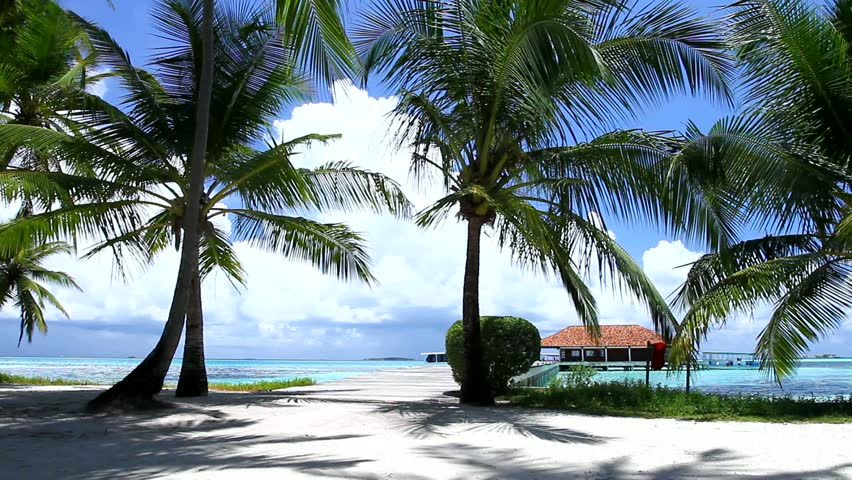 Romantic couple walking on bridge between palm trees