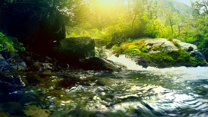 Misty Green Forest Nature River Beautiful 1ziw: Beautiful Mountain River In The Forest. River With Fresh