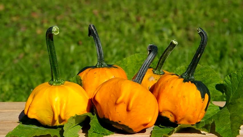 Ornamental pumpkins on wooden table  | Shutterstock HD Video #7512166