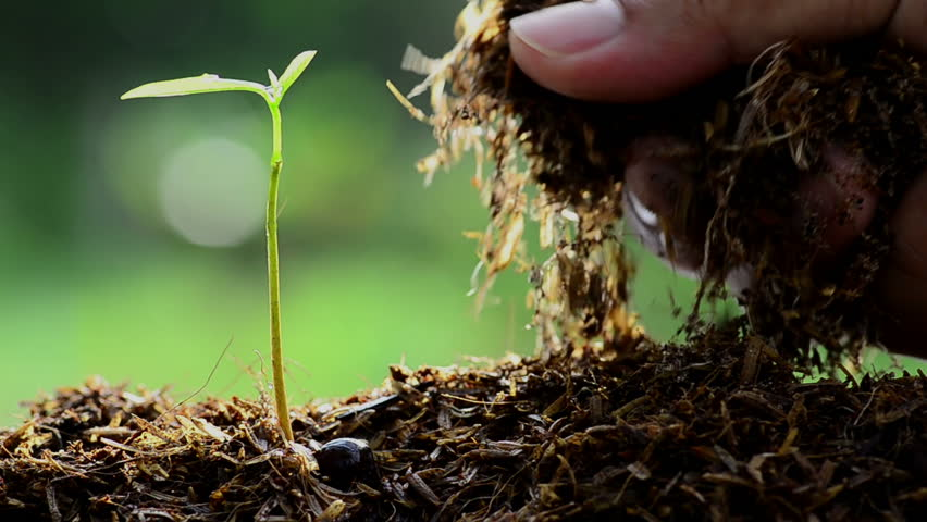 Full HD Close up Male hand keeping Farm Manure to Young tree over green environment