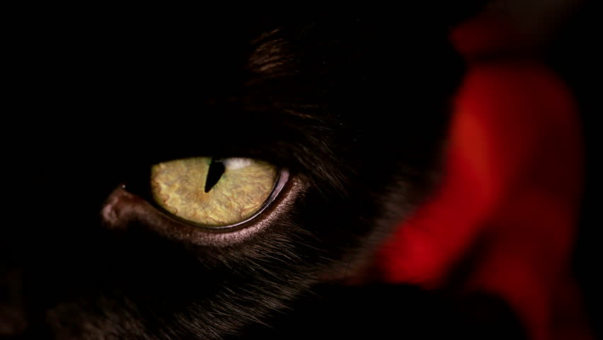 Tight shot of a black cat's highly detailed yellow / gold eye.