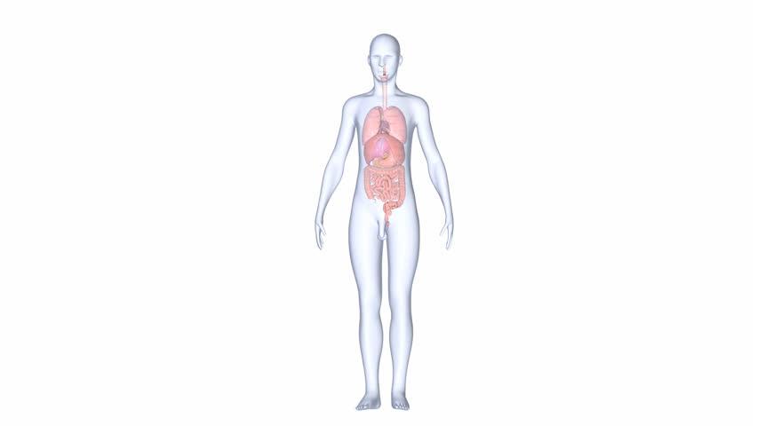 Organs | Shutterstock HD Video #7738126