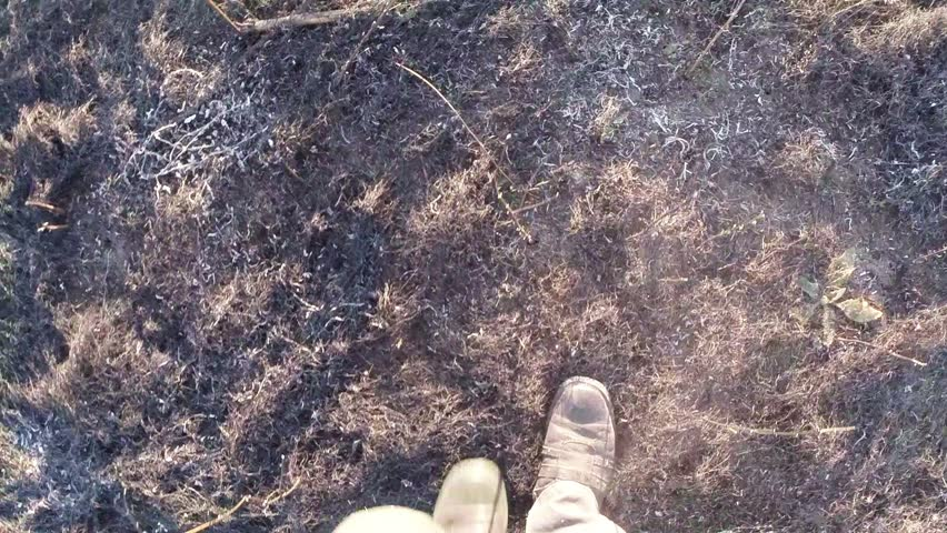 Legs in boots walking on the burnt grass top view in the first person | Shutterstock HD Video #7788496