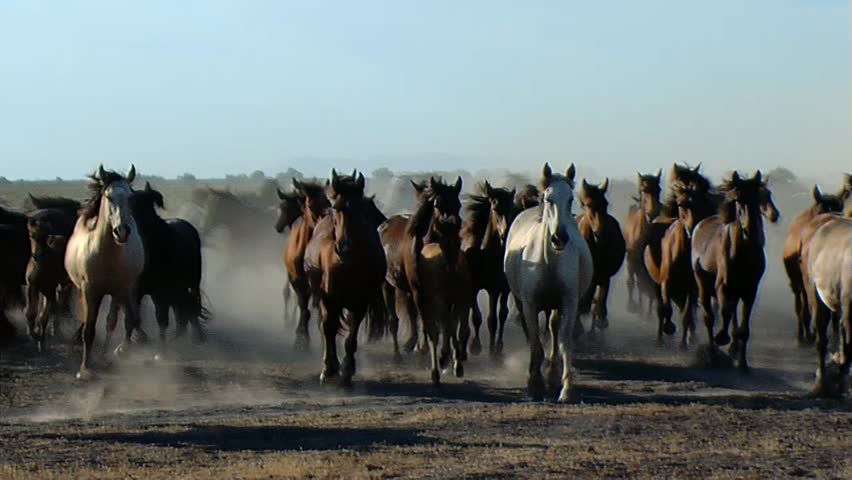 Out of the mares in the Doñana National Park. | Shutterstock HD Video #7900516