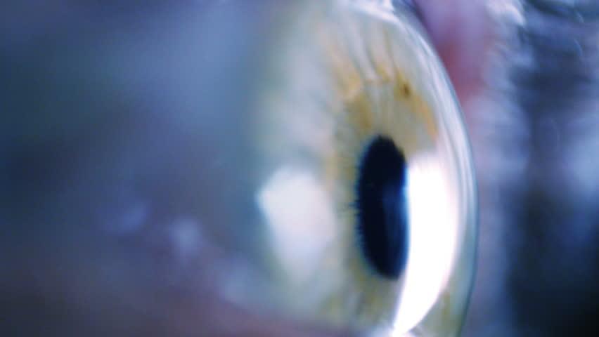 Eye iris and pupil macro. Eyeball move around. Extreme close up. Shallow depth of field #7931206