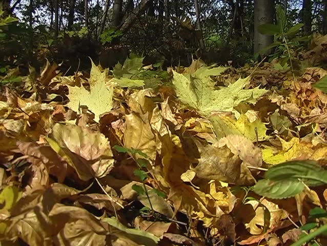 Men walk on the floor autumn leaves | Shutterstock HD Video #79486