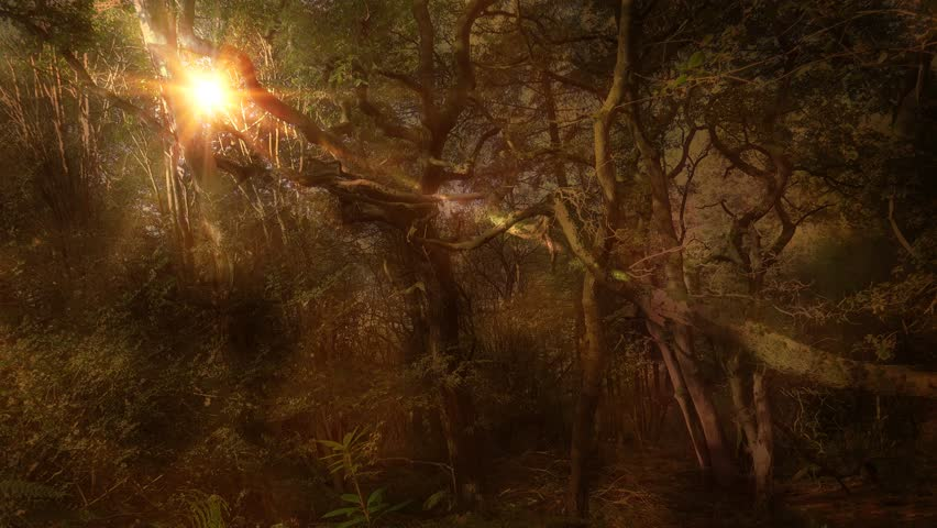 ambient autumn moonlight magical fantasy forest background