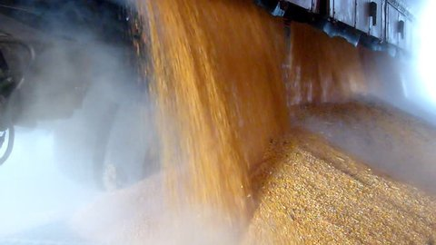 Unloading corn grain from the tractor trailer in a silo after harvest, slow motion
