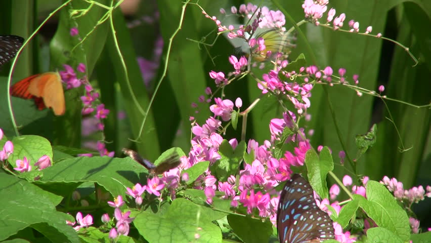 Butterflies in leaves and flowers.