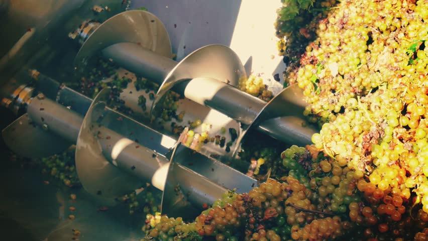 Winemaker corkscrew crusher destemmer in winemaking with cabernet sauvignon grapes | Shutterstock HD Video #7974919