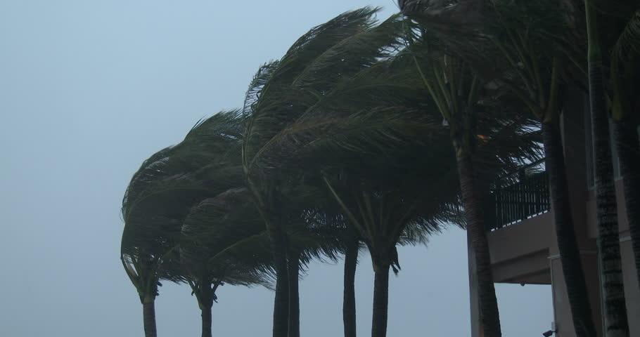 Hurricane Wind Tree | www.pixshark.com - Images Galleries ...
