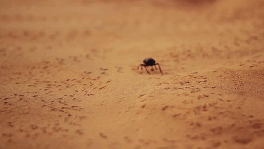 A beetle walks through a desert landscape leaving trails on the sand.