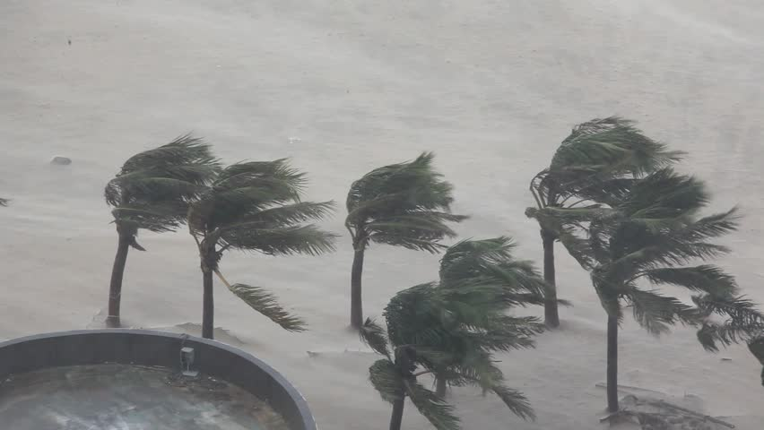 Extreme Hurricane Winds Lash Palm Trees. Footage from eyewall of hurricane as it made landfall with violent wind and flooding rain. Shot in full HD on Canon 5D Mark II 1920x1080 30p - Utor