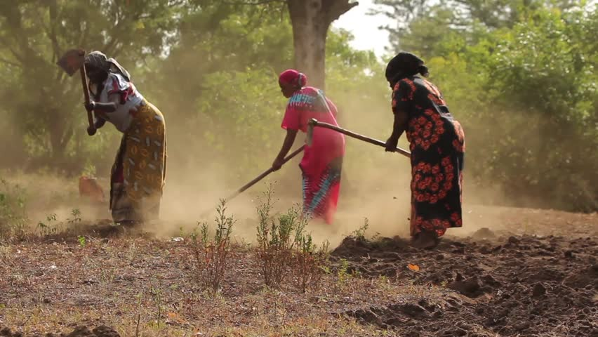 MOSHI, TANZANIA - MARCH 2013: African ladies manually ploughing a field in rural Tanzania, Africa