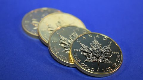 Gold Maple Leaf, Full Ounce conis, row of one-ounce Maple Leaf gold bullion coins being stacked by hand on a calm blue background, symbolic over-the-counter payment in gold.