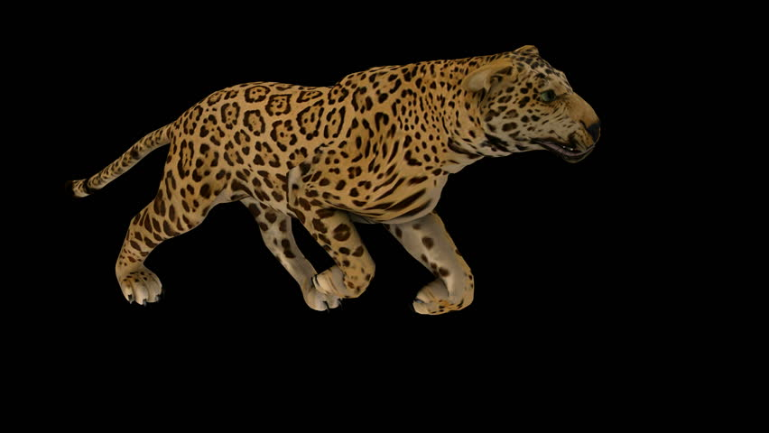 Photo-realistic Looping Jaguar Animation. Alpha Matte. 3d Render