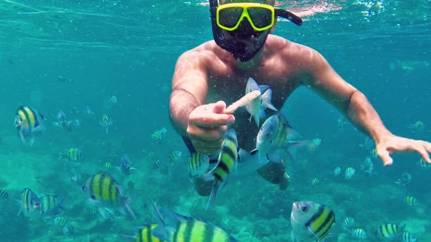 Man diving in coral reef .School of fish. Underwater scene.