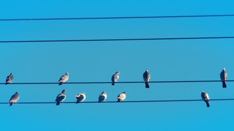 Blue Sky Close Up of Birds On A Wire then Taking Off