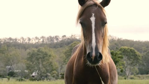 Single horse in the outback