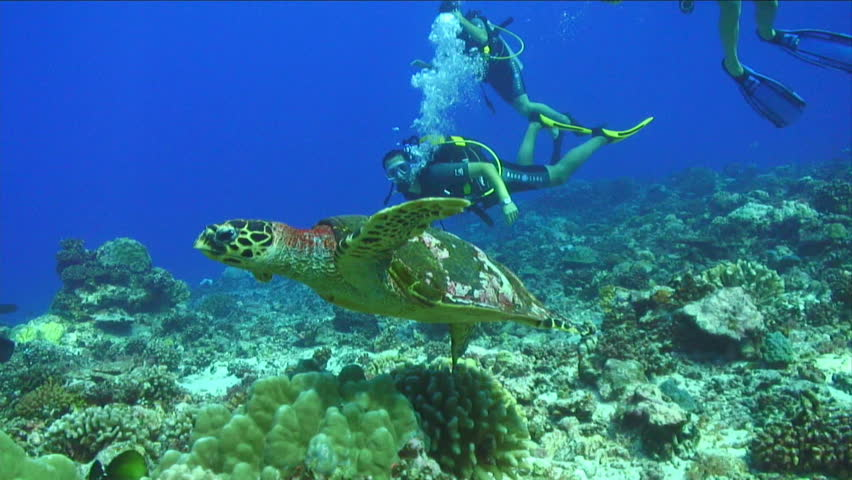 Turtle Swimming Underwater