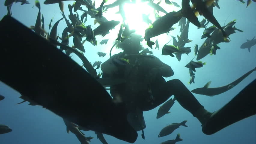 Diver surrounded by fish