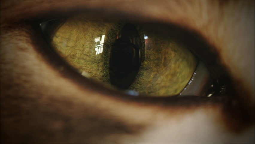 4K Cat Eye Moving and Watching Super Macro | Shutterstock HD Video #8835361
