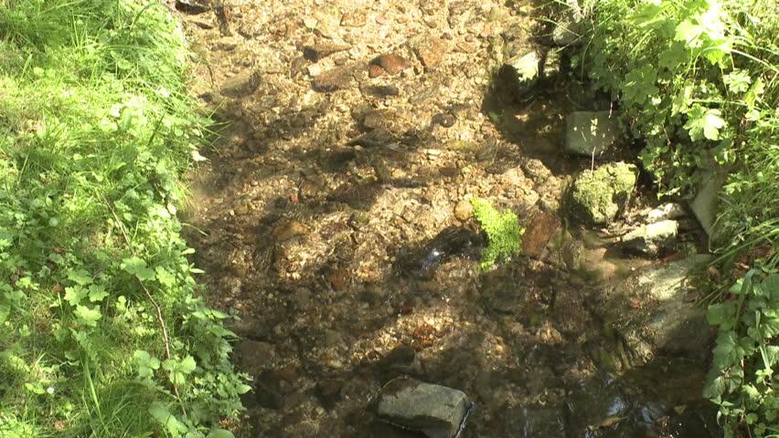 Creek | Shutterstock HD Video #8879626