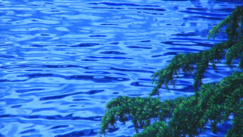 blue water and tree