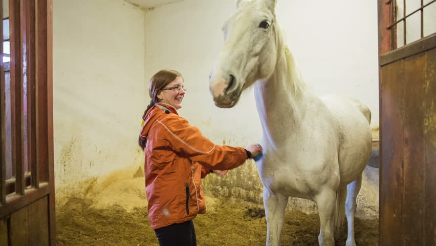 Woman caressing big white horse. Wide shot of white horse with woman in orange jacket brushing and cleaning horse before riding outside.