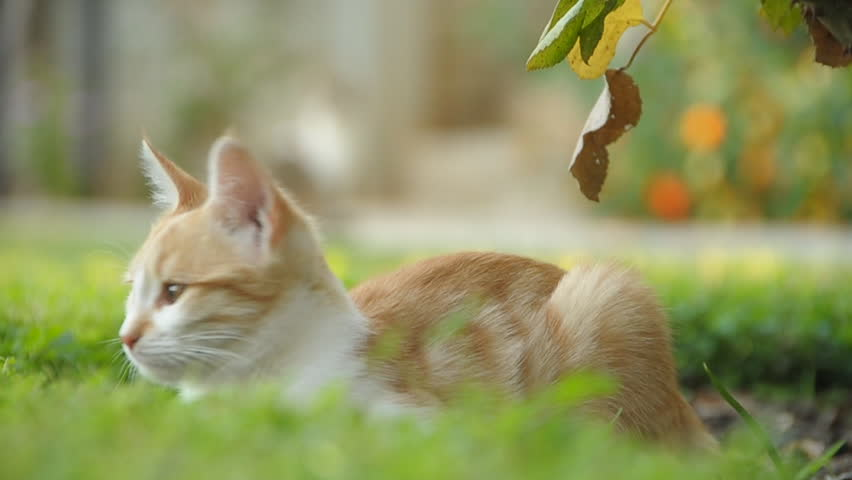 Cat | Shutterstock HD Video #925816