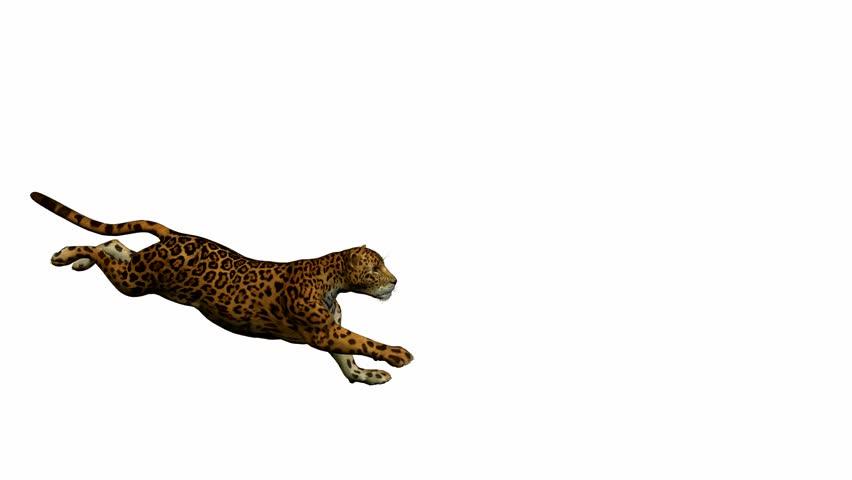 Jaguar Running On A White Background