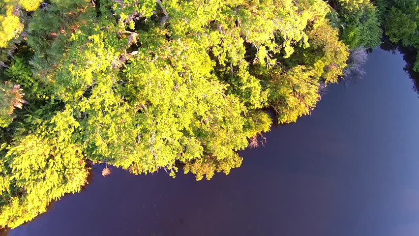 Jungle aerial view palm trees and mangroves. 90 degrees down. | Shutterstock HD Video #9425366