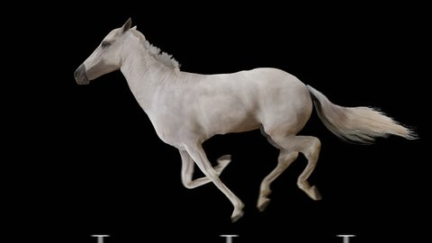 White horse runs gallop. Isolated and cyclic animation.