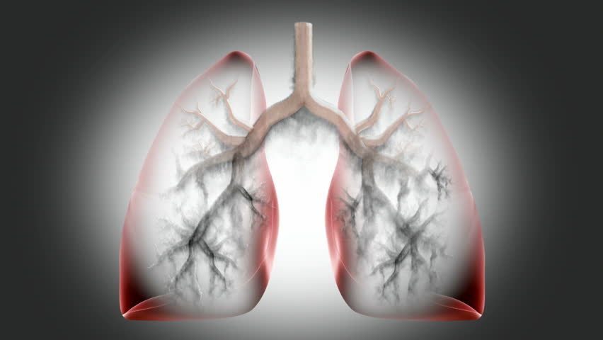 Transparent 3d Video Of Anterior Human Lungs Breatthing