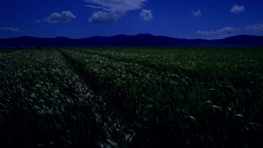 grass field at night. A Grassy Country Dirt Road, Fields Of Tall Green Grass Blowing In The Wind Greek Countryside,extending To Horizon. Day For Night Post Converted Field At