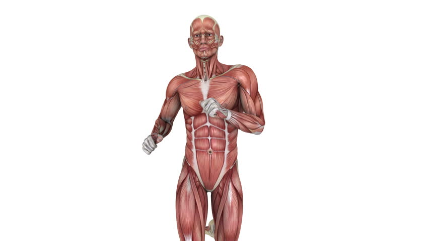 head muscular system anatomy zoom in stock footage video 1286956, Muscles