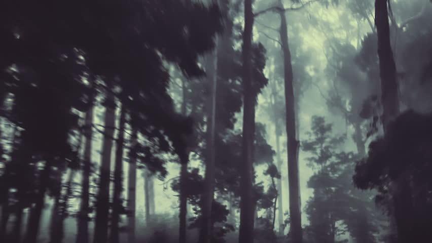 Camera track through a dark forest