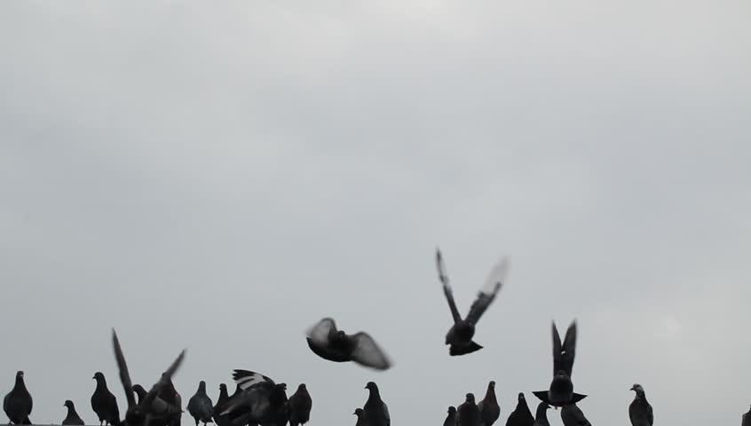 Video stock dove in flight | Shutterstock HD Video #9867386
